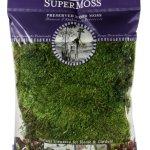 SuperMoss-Mood-Moss-Preserved-0