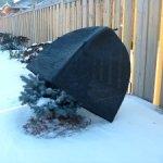 Winter-Shrub-Cover-0-2