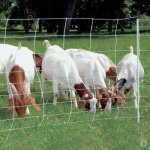 Premier-ElectroStop-Goat-Sheep-Electric-Fence-42H-x-164-L-Single-Spike-White-Premier-Top-Seller-0