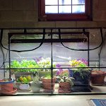 Quictent-Garden-Green-House-Mini-Portable-Hot-House-71-WX-36-D-X-36-H-Greenhouse-0