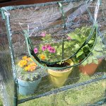 Sungmor-2-Window-Greenhouse-Flower-Plant-Grow-House-w-Strong-Antirust-Steel-Frame-and-Transparent-PVC-CoverWorth-Garden-Hothouse-0-2