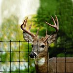 Tenax-2A120056-Economy-Deer-Control-Fence-8-x-330-Black-0
