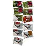 ALBJHBJHB-161-Gardening-Flower-Scissors-Shears-Multi-Purpose-shear-Large-Special-steel-0-2