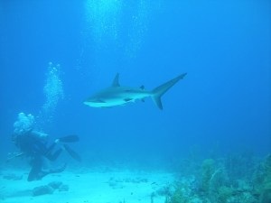 diving-and-shark