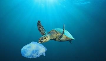 Μικροπλαστικά βρέθηκαν στο 100% των χελωνών σύμφωνα με νέα έρευνα