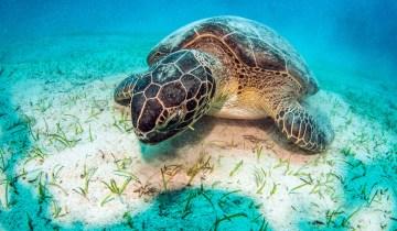 Από πλαστικό πεθαίνουν σχεδόν οι μισές χελώνες στον ωκεανό