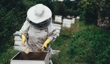 Τελικά κινδυνεύουν οι μέλισσες από το γάλα αμυγδάλου;