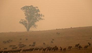 Αυστραλία: Ερημοποιείται η ήπειρος