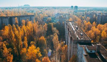 Chernobyl: Τι συνέβη μετά την καταστροφή στην άγρια ζωή;