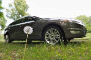 Ford dandelions