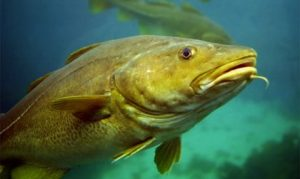 Dramatic efficiencies in fishing methods and gear have led to a tragic consequence: wasteful exploitation of sea life vital to the ocean ecosystem and human food security.