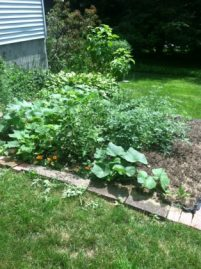 organic gardens save money on food, using eco friendly mulch, organic topsoil, organic seeds