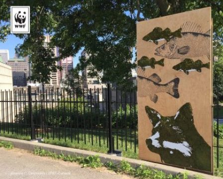 Edina Tokodi five-part eco-art installation open to public at Rutherford Park's ephemeral library on July 29