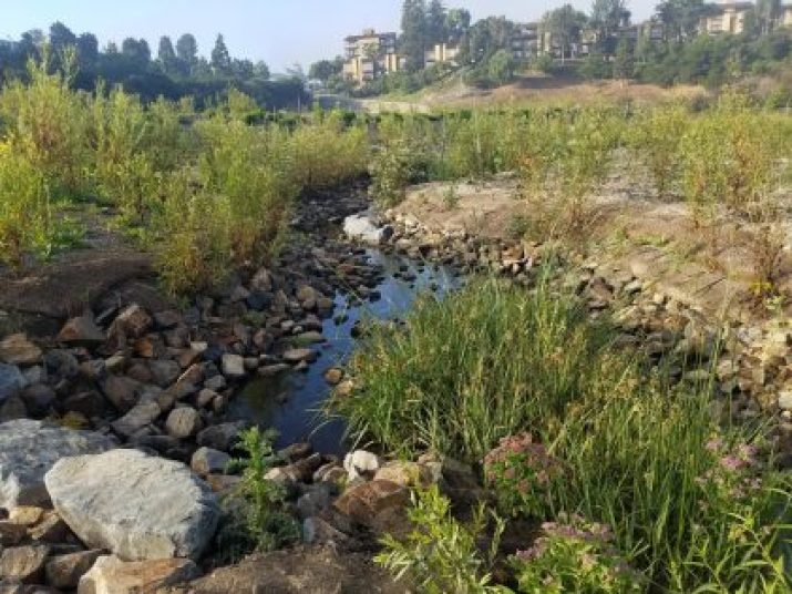 Plants and animals thrive as clean water flows in and along Big Canyon Creek, a valued urban corridor in Newport Beach. The Big Canyon Creek Restoration and Water Quality Improvement Project, planned and delivered by Burns & McDonnell, is winner of