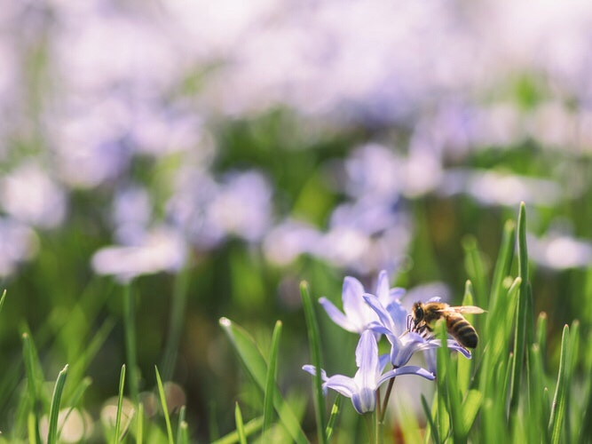 A new scientific study has shown that the insect populations are declining dramatically due to many factors such as monoculture farming and the loss of habitat. The worst thing of all is that most people don't understand the important role the insects play in our ecosystem. So the question is - should we be worried about what's happening to the insects?