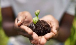 project eco-sustainable gardens empowering minority