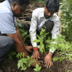 Tree planting in India. Trees