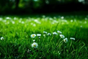If you've only recently ventured into the world of eco-friendly lifestyles, you may fail to realize the environmental destruction lawn and garden care can cause. While lawn maintenance may appear seemingly harmless, gas-powered lawn mowers spew copious amounts of harmful greenhouse gases into the atmosphere.