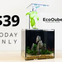 EcoQube C, a desktop ecosystem that uses basil to filter the aquarium.