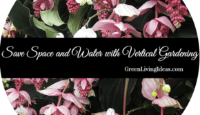 save space and water with vertical gardening
