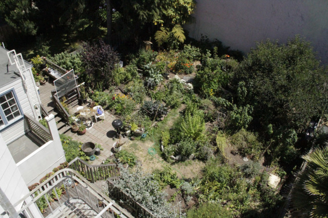 permaculture backyard