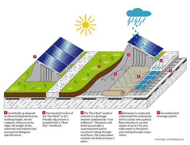 How Living Roofs Improve Solar Panel Performance Green
