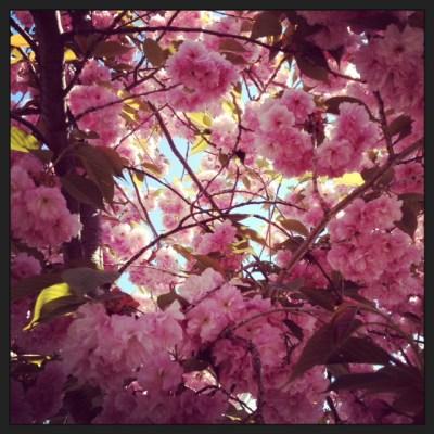 green diva spring tree