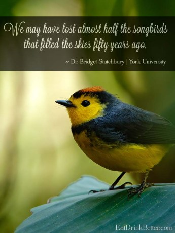 Songbirds are disappearing at an alarming rate, and we're losing more than just the beautiful sounds of spring. The Messenger is a new documentary that looks at what's happening to songbirds and what we can do.