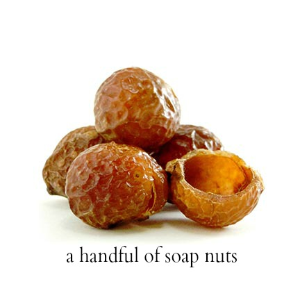 handful of soap nuts