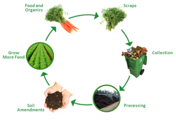 life cycle compost