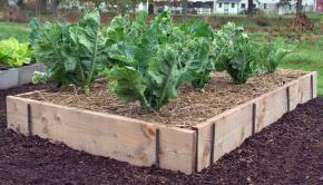 raised bed gardening ideas