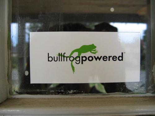 bullfrog.jpg