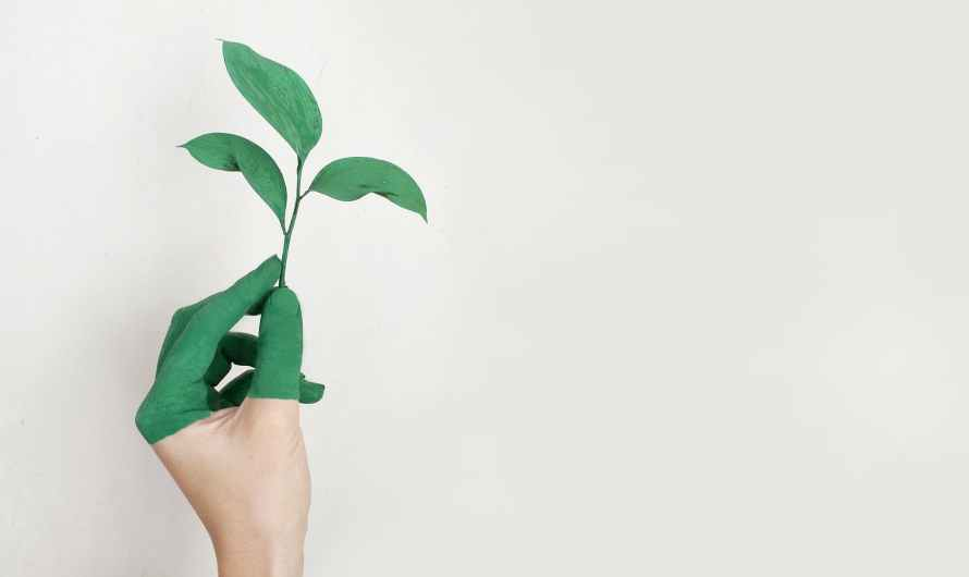 How to live more sustainably, two steps to a greener lifestyle