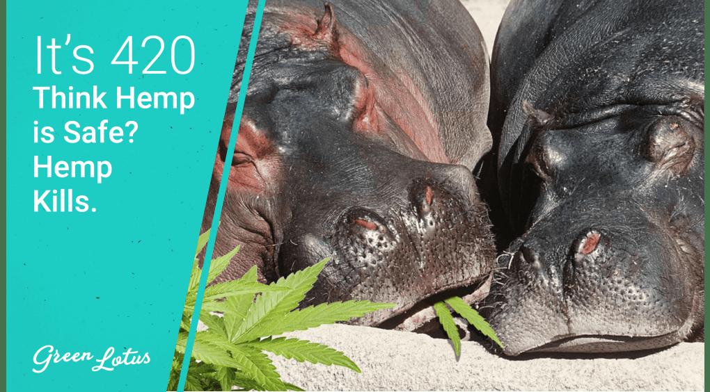 Green Lotus Hemp Blog Hippos on Hemp
