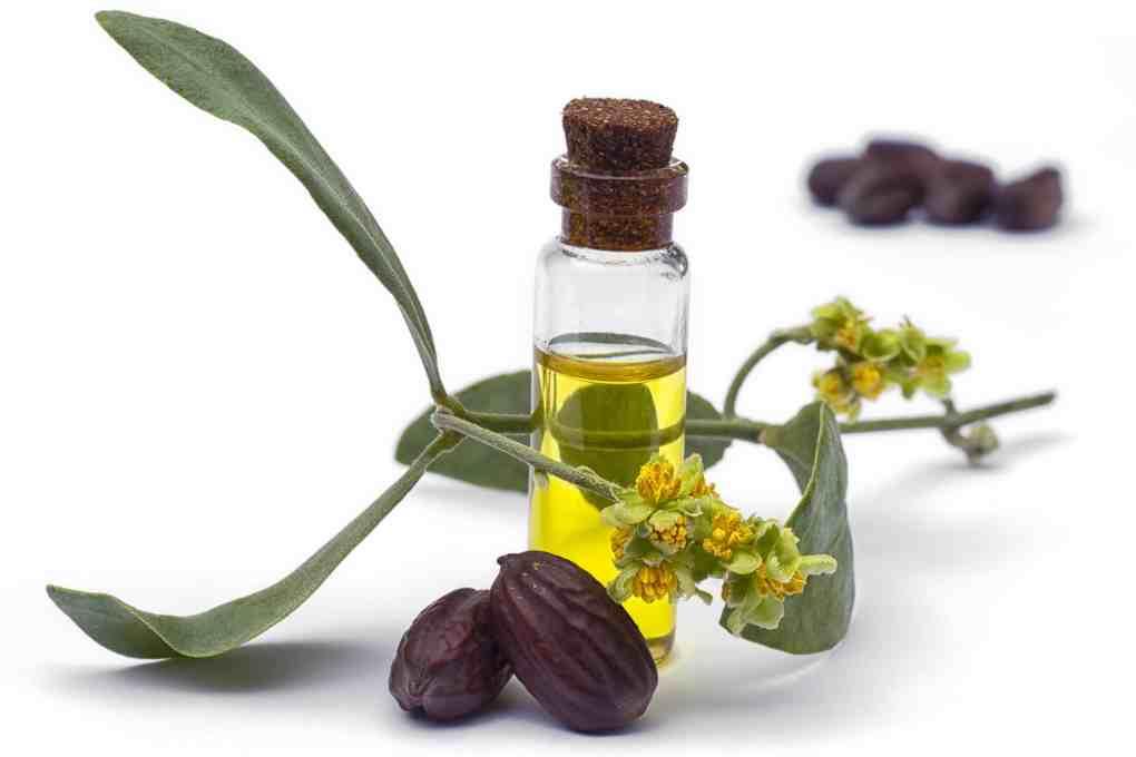 Jojoba oil, leaves, flower and seeds, green lotus hemp, cbd, salve