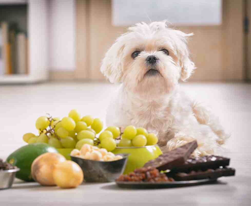Green Lotus Hemp Blog Grapes Toxic to Pets