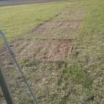 Chicken Tracks