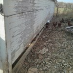 Chicken Coop Rehab: Part 4