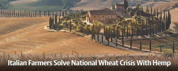Italian Farmers Solve National Wheat Crisis With Hemp