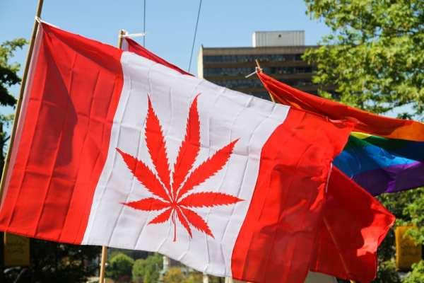 Canadian Pot Leaf Flag