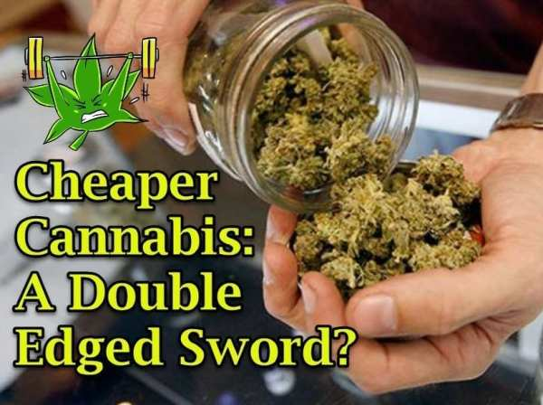 Cheaper Cannabis: A Double Edged Sword?