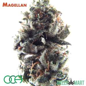 Magellan by Oregon Cannabis Authority