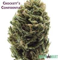 Crocket's Confidential