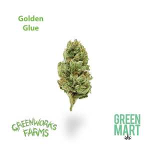 Greenworks Farms Golden Glue Flower