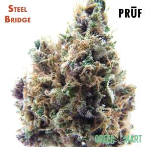 Steel Bridge by Pruf Cultivar