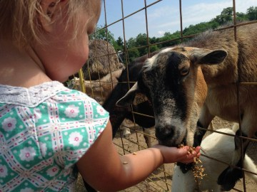Green Meadows Petting Farm Goat Feed