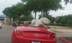The Easter Bunny's Girlfriend Drives a Lexus…