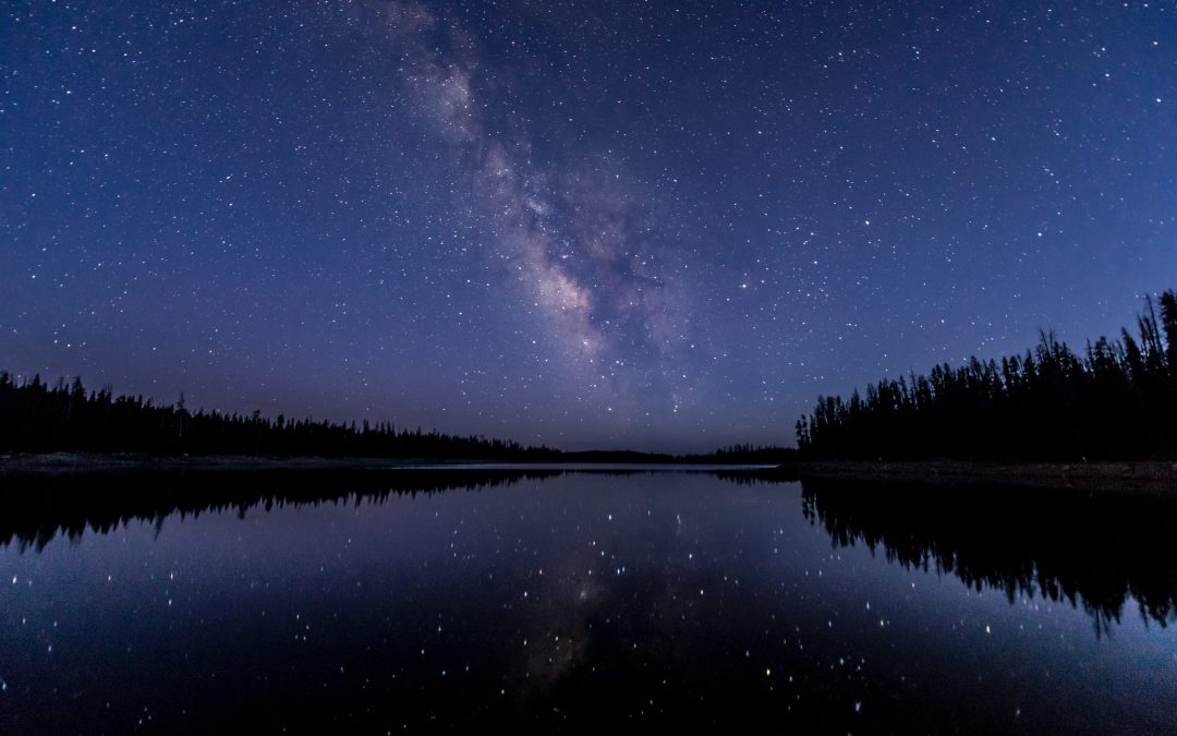 silhouette of trees near body of water under sky with stars