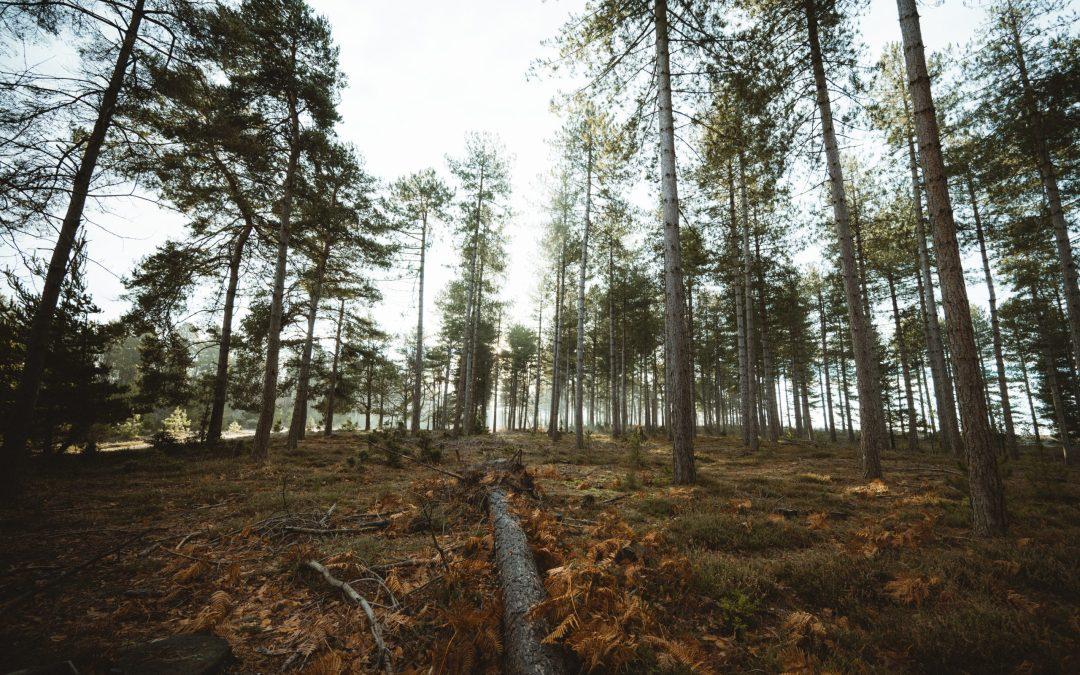 brown tree trunk on brown soil