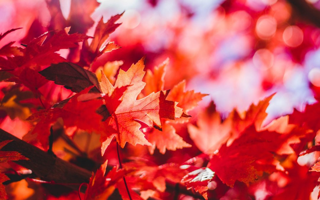 closeup photography of red leaf plant